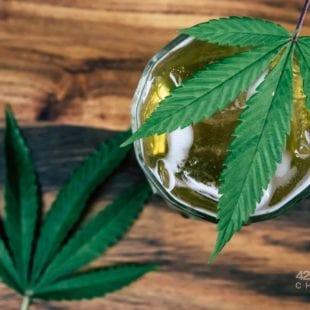 Canadá: Estudio confirmaría que la legalización del cannabis disminuye el consumo de alcohol